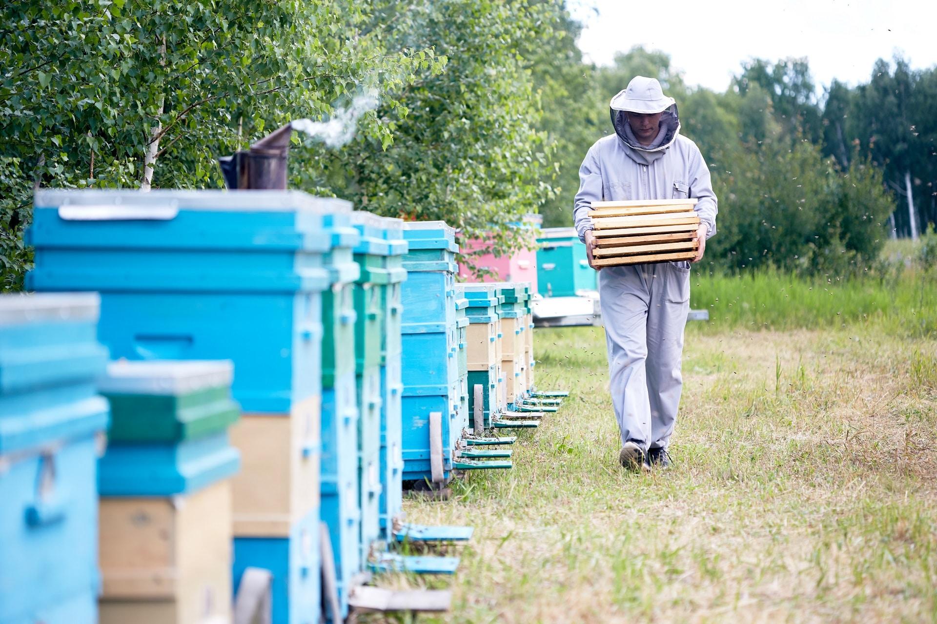Apiculteur travaillant dans le rucher